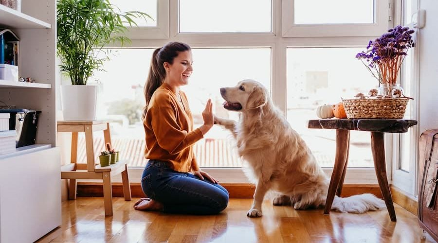 Model By-laws for pets in strata - Strataville